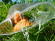 Pasted into Biodegradable Products 80x60 - Biodegradable PLA products: Waste that consumes itself